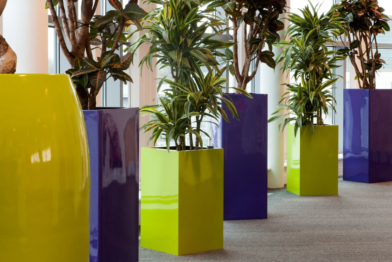 The benefits of greenery in office design